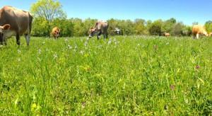 Pastures-1024x561